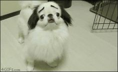 This dog with fab eyebrows. | The 40 Greatest Dog GIFs Of AllTime