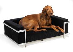 Moderno Dog Sofa