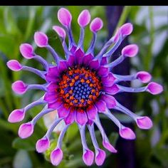 WOW!!!! what a unique flower...God is so awesome ....creating such amazing beauty like this just for us!