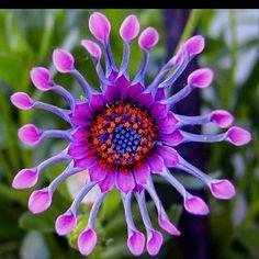 Cada momento y estado de crecimiento contiene una belleza. Enséñame a relajarse lo suficiente para apreciar la vida y todo lo que tiene ~ Desconocido Each moment and state of growth contains a loveliness. Teach me to relax enough to appreciate life and all it holds ~ Unknown
