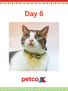 Here is today's 12 Days of Pinterest featured image (12/8/2012). Pin this Gold Glitter Collar image to one of your boards for a chance to win a 500 dollar Petco shopping spree, plus 500 dollar Petco Gift Card for a Petco Foundation Shelter/Rescue of your choice. Winner will be announced tomorrow (12/9/2012) between 12 pm and 5 pm Pacific time.