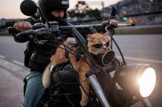 TOPSHOT-BRAZIL-BIKER-CAT - YASUYOSHI CHIBA/AFP/Getty Images