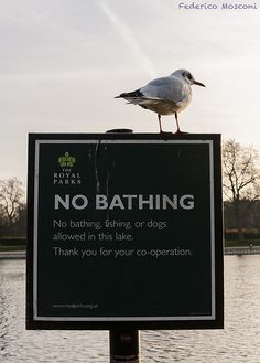 No bathing