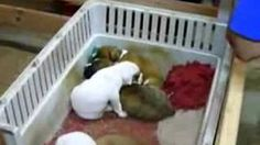 Funny & Cute Puppy Lullaby, via YouTube.  How sweet!!