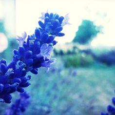 Zobacz na Instagramie zdjęcia i filmy użytkownika Ines☆ (@magiaogrodu)