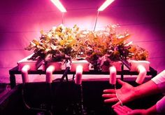 Growing Underground » Feeding The Future with zero effect on the environment