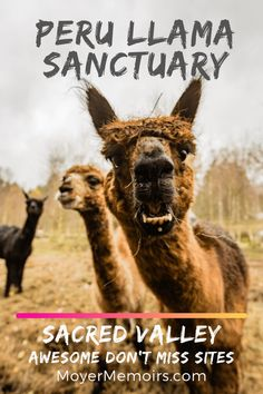 Looking for some awesome gifts for Llama lovers? Llama's are everywhere at the moment and for good reason: they're cute, funny and cuddly. Machu Picchu, Peru Travel, Solo Travel, Llama Gifts, South America Travel, Plan Your Trip, Central America, Travel Guides, Trip Planning