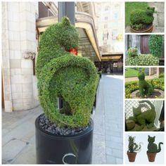 cat topiarys