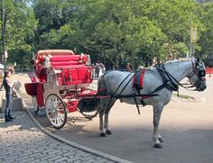 Took a carriage ride through Central Park New York
