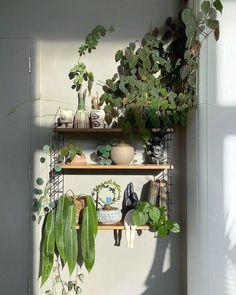 My New Room, My Room, Hanging Plants, Indoor Plants, Hanging Gardens, Indoor Gardening, Air Plants, Cactus Plants, Aesthetic Room Decor