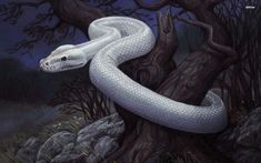 Hvidslangen- Norse myth: a huge white snake that is surrounded and protected by millions of smaller snakes. It emerges from a white cloud and its glare causes death and pain.