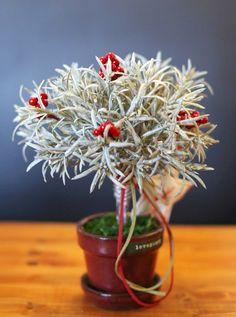 [바보사랑] 별 그리고 로즈마리 /조화/화병/화분/인테리어소품/데코소품/꽃/vases/artificial flower/Pollen/interior accessories/Decoration/Flower