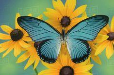 butterfly wings Butterfly On Flower, Butterfly Pictures, Butterfly Print, Butterfly Wings, Most Beautiful Butterfly, Baby Animals Super Cute, Insect Art, Butterfly Wallpaper, Rock Art
