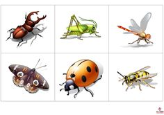 ! Swedish Language, Bugs And Insects, Spring Activities, Nature Crafts, Human Body, Clip Art, Natural, Education, Pictures