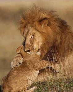 This is why Trophy Hunting Should Be Banned! These Beautiful Lions Have Families Too. #BigCatFamily