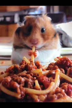 Having a bad day? Here is a hamster eating spaghetti. :-)