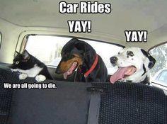 Promenade en voiture !