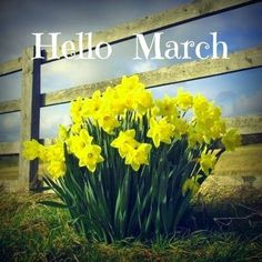 Daffodils were given to me during my treatments on the first day of spring. My husband gives them to me every year since to celebrate my life. Seasons Months, Days And Months, Seasons Of The Year, Months In A Year, 12 Months, Hello March Images, Hello March Quotes, First Day Of Spring, Spring Is Here