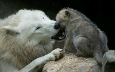 Mummy and Baby...how can you kill these precious Beings...?!?!?!