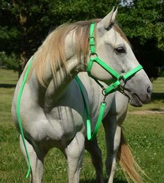 Draft Horse Size ANY COLOR Horse HALTER & LEAD for Turnout or Show BETA BIOTHANE