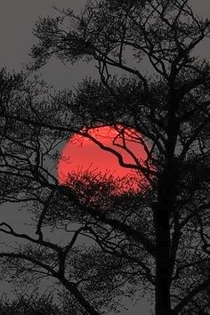 New Orange Tree Photography Harvest Moon 40 Ideas Moon Pictures, Pretty Pictures, Moon Images, Beautiful Moon, Beautiful World, Blood Red Moon, Shoot The Moon, Tree Photography, Landscape Photography