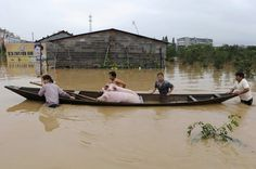 Floods in China - farmers take their pigs to safety in a boat
