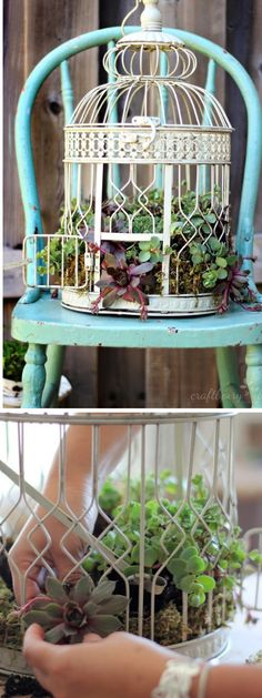 Birdcage Planter Ideas You Will Love To Make A garden is far. Informations About Birdcage Planter Garden Paths, Garden Art, Garden Design, Garden Ideas, Garden Inspiration, Garden Planters, Succulents Garden, Succulent Planters, Birdcage Planter
