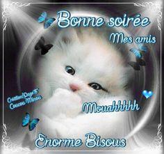 Bonne soirée mes amis... Mouahhhhh Énorme Bisous #bonnesoiree chat chaton papillons mignon
