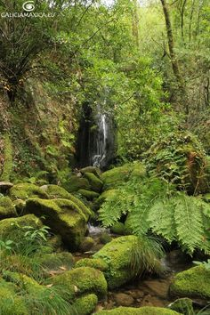 Magic Symbols, Green Man, Celtic, Beautiful Places, Waterfall, Greek, Tropical, Fantasy, Nature