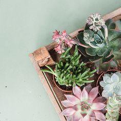 Jane Powers explores the seductive allure of succulents. Fall Winter, Autumn, Succulents Garden, Heaven, Magazine, Sky, Fall Season, Heavens, Fall
