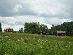 Midzomer in midden Zweden