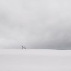 Winter Minimal, Slovakia, 2012, photography by Zoltan Bekefy