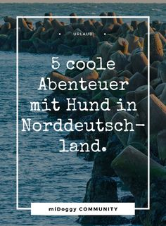 Adventure Northern Germany – 5 cool adventures with a dog Dog Travel, Puppy Pictures, Camping Hacks, Places To Go, Dog Cat, Germany, Europe, Community, Puppies
