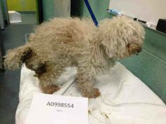 This poor baby needs help.  He's 13 and has already led a life of neglect.  He needs someone to love him.