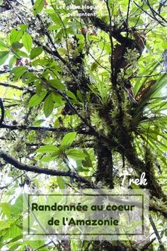 Trek en Amazonie équatorienne Destinations, Plants, Movie Posters, Travel, Paradis, Latin America, Culture, Train Trip, Outdoor Travel