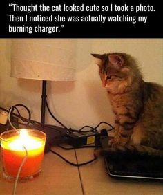 "Funny Animal Pictures Of The Day - 24 Pics - watching like ""yes - burn, burn my master - burn"""