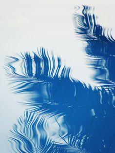 Quand le palmier imprime l'eau...