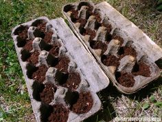 start seeds is using cardboard egg cartons, or as I like to call them, poor man's peat pots