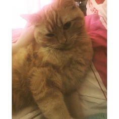 『Kenta, let's take a photo...what's that pose?』 このポーズなんか。。笑  #cute #kitty #catlady #sweety #mybabe #賢太 #可愛 #好 #猫 #ベビーle_cronache_di_nipponia2016/03/15 11:00:17