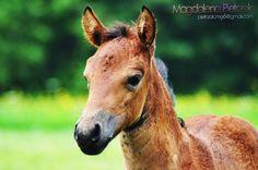 Foal. by AtomHeart-Mother.deviantart.com on @DeviantArt