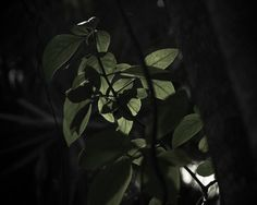 Tropical Leaf No.3, Nature Photography, Mexico Landscape Art, Green, Minimalist, Natural, Botanical. by MerakiPaper.