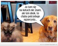 Pozowanie jak pies z kotem –