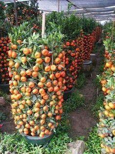 Irresistible What Is Hydroponic Gardening Ideas. Glorious What Is Hydroponic Gardening Ideas. Vegetable Garden For Beginners, Starting A Vegetable Garden, Backyard Vegetable Gardens, Vegetable Garden Design, Veg Garden, Fruit Garden, Edible Garden, Gardening For Beginners, Gardening Tips