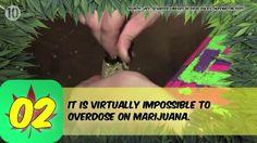 theganjatrain:  Just want to get high
