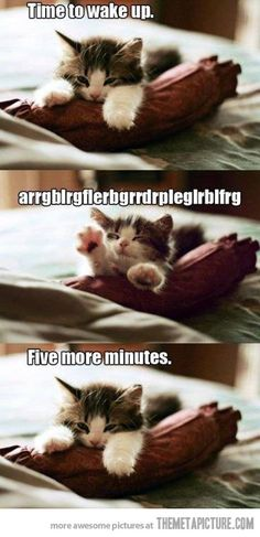 Pretty much how my mornings usually go…