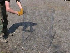 DIY Potato cages for increased yield