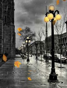 Rain drops & leaves