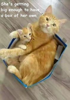 She's getting                                                                 big enough to have                                                            a box of her own http://cheezburger.com/9112867328