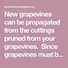 New grapevines can be propagated from the cuttings prunedfrom your grapevines. Since grapevines must be prunedevery year, this gives you the opportunity to plant more and more grapevines every year without going out and spending hard earned money for more. We like free. You will want to plan your pruningwith the plan of planting your … … Continue reading →