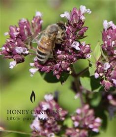 Beeswax Honey Candles - Save the Bees